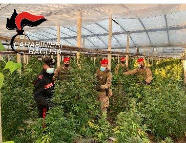 https://www.ragusanews.com//immagini_articoli/04-05-2021/scoperta-una-maxi-piantagione-di-cannabis-a-vittoria-280.jpg