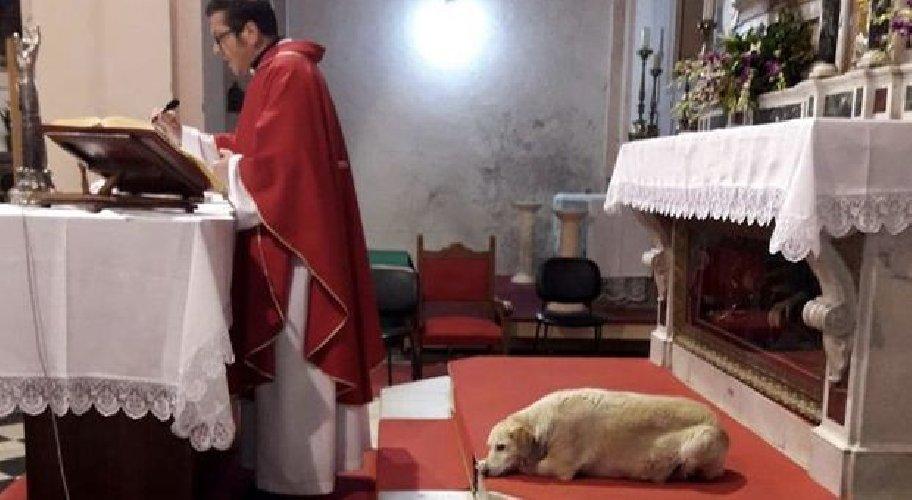 https://www.ragusanews.com//immagini_articoli/04-06-2019/a-frosinone-un-cane-celebra-messa-italo-500.jpg