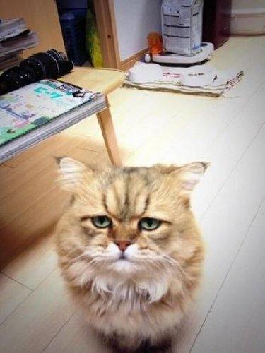 https://www.ragusanews.com//immagini_articoli/04-06-2019/ha-ucciso-un-gatto-per-mangiarselo-accade-in-sicilia-500.jpg