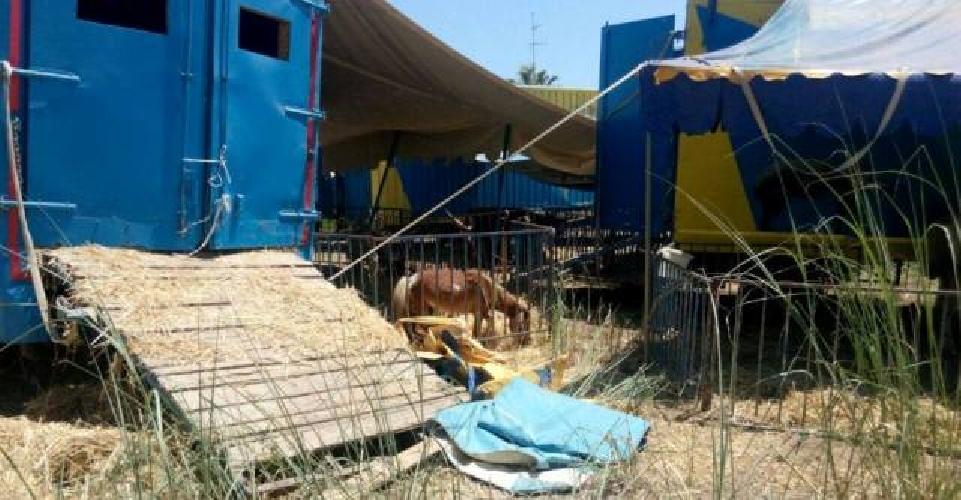 http://www.ragusanews.com//immagini_articoli/04-08-2015/la-polizia-fa-togliere-le-tende-al-circo-a-marina-di-modica-500.jpg