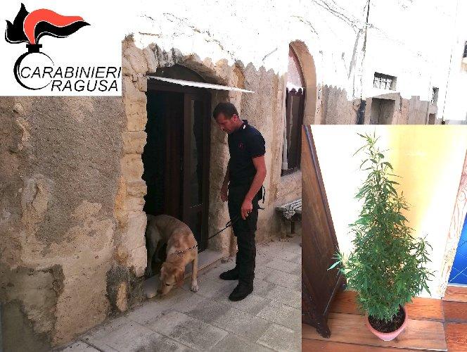 https://www.ragusanews.com//immagini_articoli/04-08-2019/droga-due-arresti-a-ragusa-500.jpg