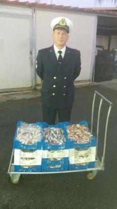 http://www.ragusanews.com//immagini_articoli/04-11-2016/pesce-sotto-misura-scoglitti-sequestro-420.jpg