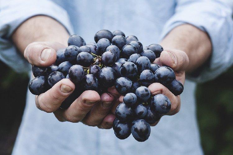 https://www.ragusanews.com//immagini_articoli/04-11-2019/la-dieta-uva-rimedio-perfetto-per-perdere-peso-500.jpg