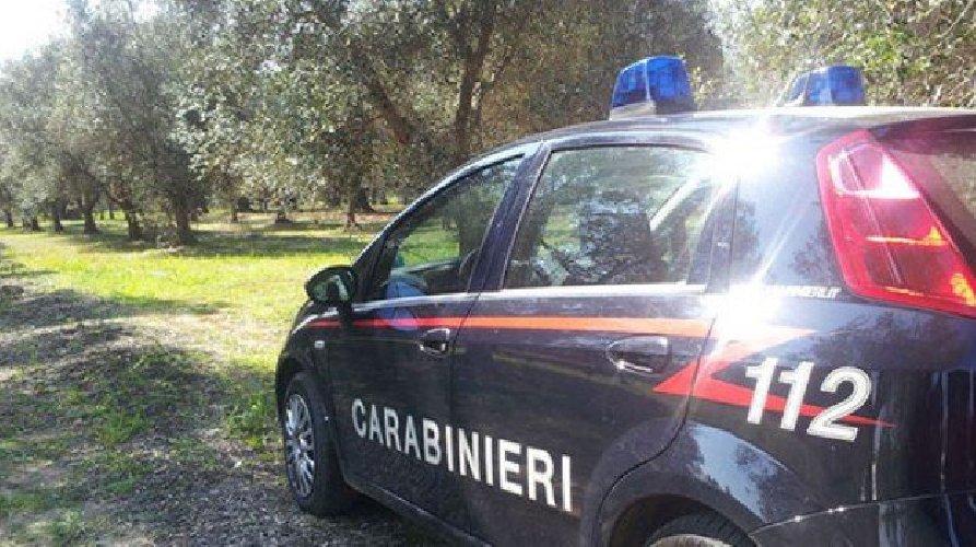https://www.ragusanews.com//immagini_articoli/05-02-2020/condannati-i-due-carabinieri-che-rubavano-ortaggi-500.jpg