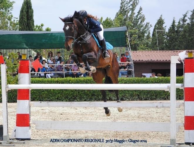 https://www.ragusanews.com//immagini_articoli/05-06-2014/salto-a-ostacoli-5-binomi-per-la-ippica-ragusana-500.jpg