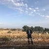 https://www.ragusanews.com//immagini_articoli/05-06-2017/montalbano-brucia-jeep-bentivoglio-foto-100.jpg