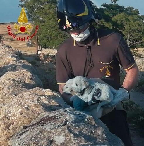 https://www.ragusanews.com//immagini_articoli/05-06-2021/1622879089-salvati-3-cagnolini-caduti-in-un-fossato-all-antica-stazione-di-chiaramonte-1-500.jpg