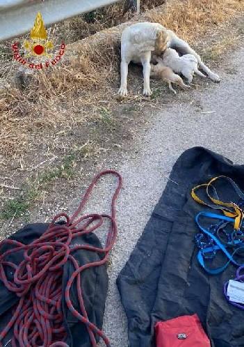 https://www.ragusanews.com//immagini_articoli/05-06-2021/salvati-3-cagnolini-caduti-in-un-fossato-all-antica-stazione-di-chiaramonte-500.jpg