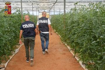 http://www.ragusanews.com//immagini_articoli/05-07-2017/caporalato-arrestato-imprenditore-agricolo-francesco-miccich-240.jpg