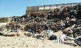 https://www.ragusanews.com//immagini_articoli/05-08-2016/inquinamento-e-disastro-ambientale-a-marina-di-acate-100.jpg