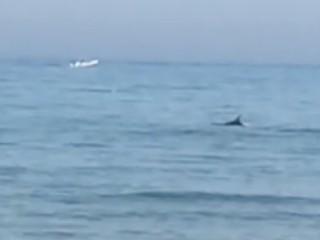 https://www.ragusanews.com//immagini_articoli/05-08-2020/marina-di-modica-delfino-caccia-un-branzino-video-240.jpg