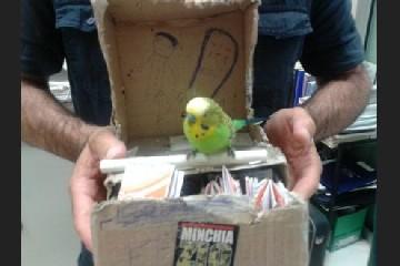 https://www.ragusanews.com//immagini_articoli/05-08-2020/piume-tagliate-per-non-fare-volare-i-pappagallini-per-foto-turisti-240.jpg