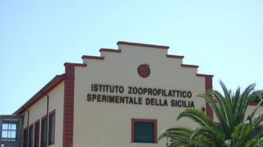 https://www.ragusanews.com//immagini_articoli/05-09-2018/istituto-zooprofilattico-sperimentale-sicilia-cerca-laureati-500.jpg