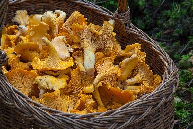 https://www.ragusanews.com//immagini_articoli/05-11-2019/dieta-con-i-funghi-per-dimagrire-con-gusto-500.jpg