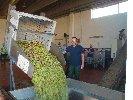 https://www.ragusanews.com//immagini_articoli/05-11-2019/l-olivicoltura-di-qualita-frantoi-di-scicli-100.jpg