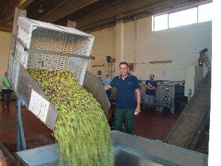 https://www.ragusanews.com//immagini_articoli/05-11-2019/l-olivicoltura-di-qualita-frantoi-di-scicli-240.jpg