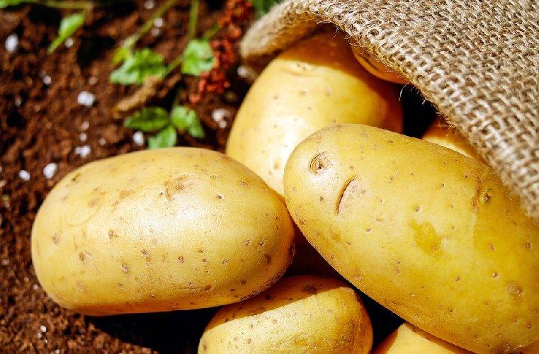 https://www.ragusanews.com//immagini_articoli/05-11-2019/la-dieta-patata-per-un-dimagrimento-lampo-500.jpg