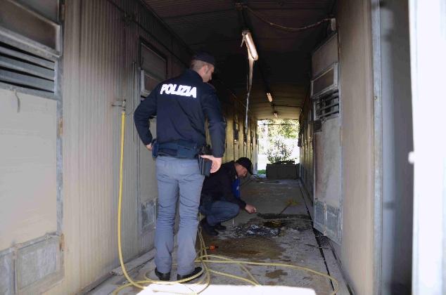 http://www.ragusanews.com//immagini_articoli/05-12-2016/incendio-al-canile-di-vittoria-indagini-della-polizia-420.jpg