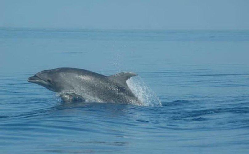 https://www.ragusanews.com//immagini_articoli/05-12-2020/pino-il-delfino-da-18-anni-vive-alle-eolie-500.jpg