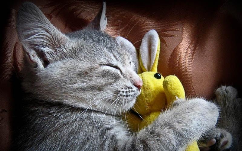 http://www.ragusanews.com//immagini_articoli/06-02-2016/un-libro-sull-adozione-dei-gatti-500.jpg