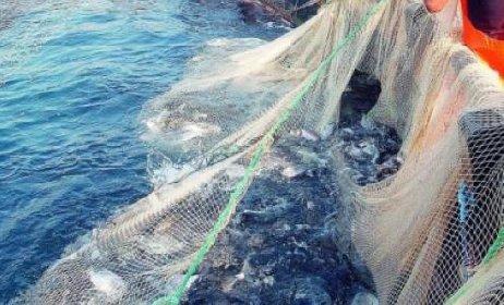 https://www.ragusanews.com//immagini_articoli/06-03-2021/sicilia-pescatore-cala-le-reti-e-pesca-7-bombe-della-seconda-guerra-280.jpg