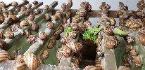 https://www.ragusanews.com//immagini_articoli/06-04-2019/e-per-finire-lumache-100.jpg