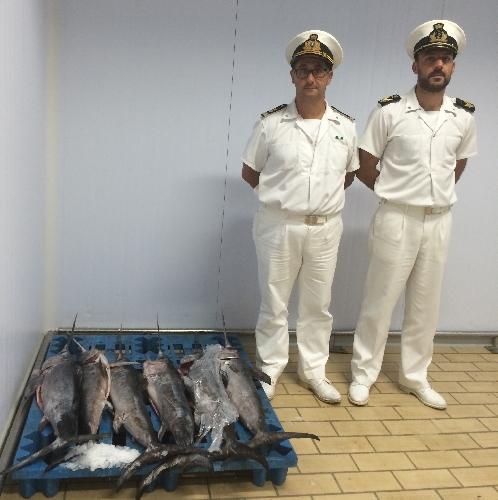 http://www.ragusanews.com//immagini_articoli/06-07-2017/dopo-tonno-rosso-pescespada-abusivo-500.jpg