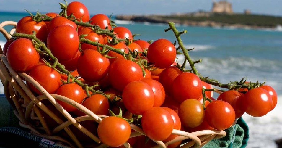 https://www.ragusanews.com//immagini_articoli/06-08-2018/migliora-export-pomodoro-siciliano-qualita-solo-500.jpg