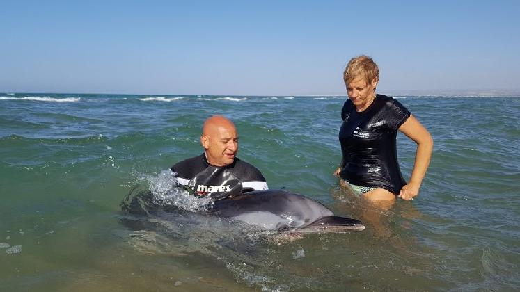 http://www.ragusanews.com//immagini_articoli/06-09-2016/soccorso-un-delfino-a-marina-di-marza-420.jpg