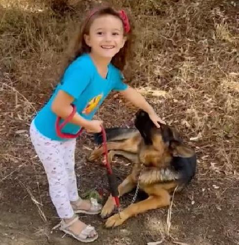 https://www.ragusanews.com//immagini_articoli/06-09-2021/monterosso-dice-no-alla-violenza-sugli-animali-il-cane-dalla-d-urso-video-500.jpg