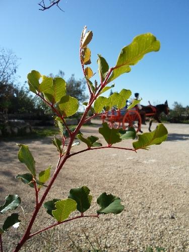 https://www.ragusanews.com//immagini_articoli/06-11-2013/prosegue-il-progetto-tradizioni-agricole-iblee-500.jpg