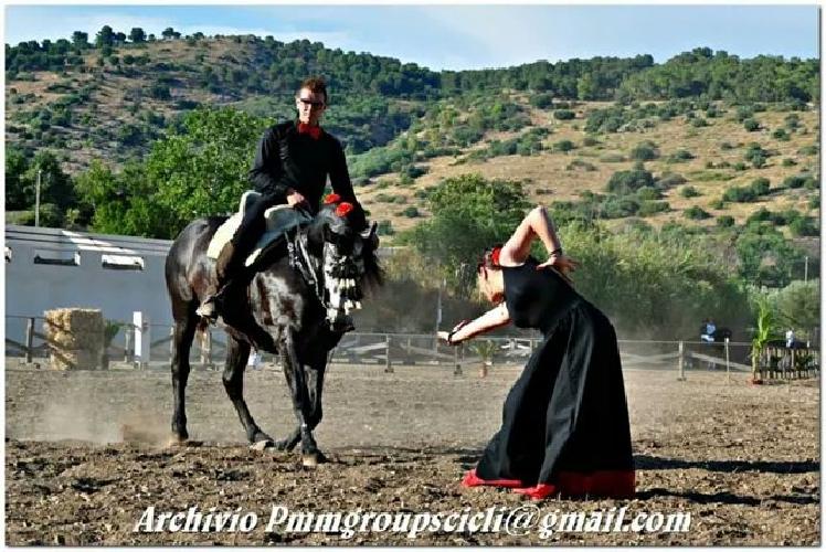 http://www.ragusanews.com//immagini_articoli/06-11-2014/manifestazione-equestre-alta-scuola-spagnola-500.jpg