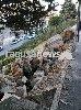 https://www.ragusanews.com//immagini_articoli/06-12-2017/ragusa-camion-sosta-finisce-rotatoria-salesiani-guasto-freni-100.jpg