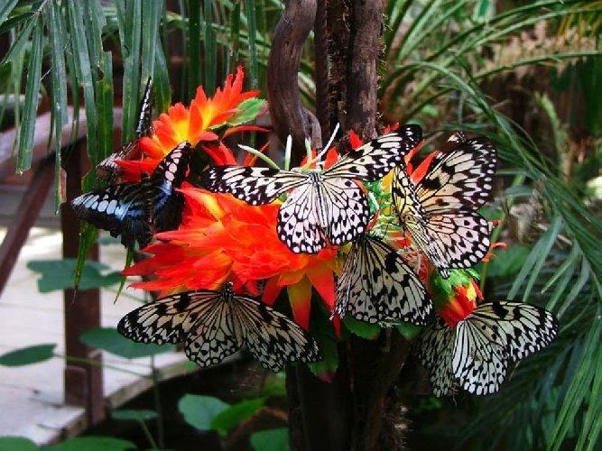 http://www.ragusanews.com//immagini_articoli/06-12-2017/siracusa-arriva-casa-farfalle-500.jpg