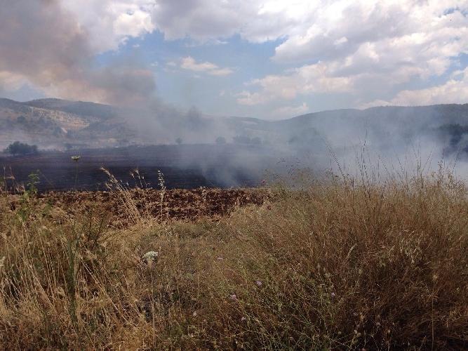 http://www.ragusanews.com//immagini_articoli/07-06-2016/incendio-a-chiaramonte-distrutte-decine-di-ettari-di-campi-di-frumento-500.jpg