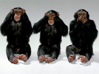 https://www.ragusanews.com//immagini_articoli/07-08-2020/covid-i-siciliani-come-le-scimmie-la-colpa-dei-giornalisti-240.jpg