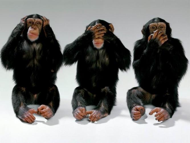 https://www.ragusanews.com//immagini_articoli/07-08-2020/covid-i-siciliani-come-le-scimmie-la-colpa-dei-giornalisti-500.jpg