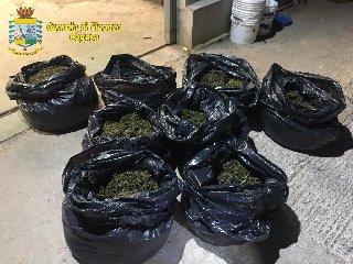 https://www.ragusanews.com//immagini_articoli/08-02-2020/sequestrata-una-piantagione-con-7-mila-piante-di-droga-240.jpg