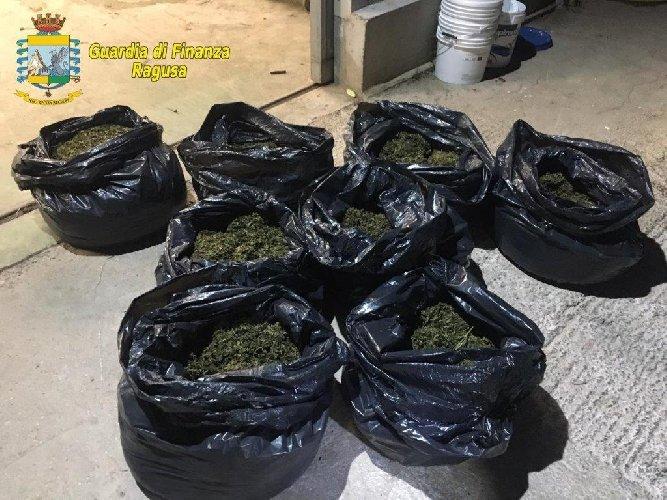 https://www.ragusanews.com//immagini_articoli/08-02-2020/sequestrata-una-piantagione-con-7-mila-piante-di-droga-500.jpg