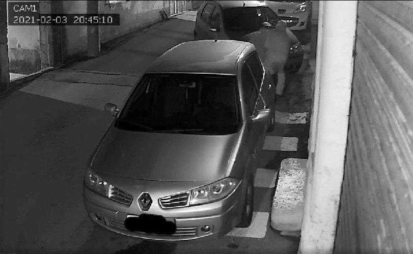 https://www.ragusanews.com//immagini_articoli/08-02-2021/modica-il-ladro-di-piantine-mai-lasciarne-una-in-strada-video-500.jpg