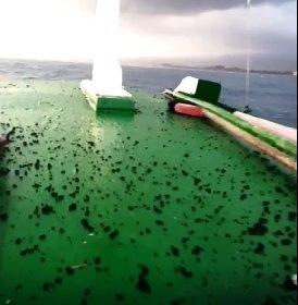 https://www.ragusanews.com//immagini_articoli/08-03-2021/etna-lapilli-fino-al-mare-barca-fugge-dalla-pioggia-di-cenere-video-280.jpg