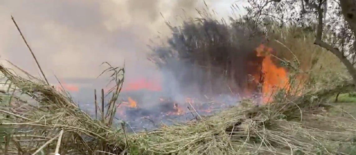 https://www.ragusanews.com//immagini_articoli/08-04-2021/incendio-a-vendicari-il-sindaco-bonfanti-e-una-dichiarazione-di-guerra-500.jpg