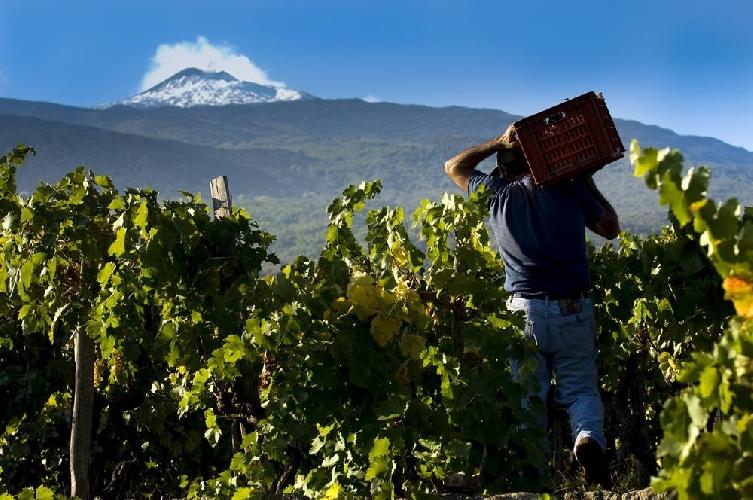http://www.ragusanews.com//immagini_articoli/08-05-2017/sicilia-mondiale-wine-lovers-lunica-italia-500.jpg