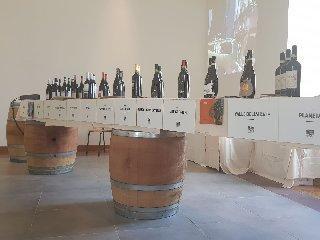 https://www.ragusanews.com//immagini_articoli/08-05-2018/giro-italia-tappa-caltagirone-brinda-cerasuolo-240.jpg