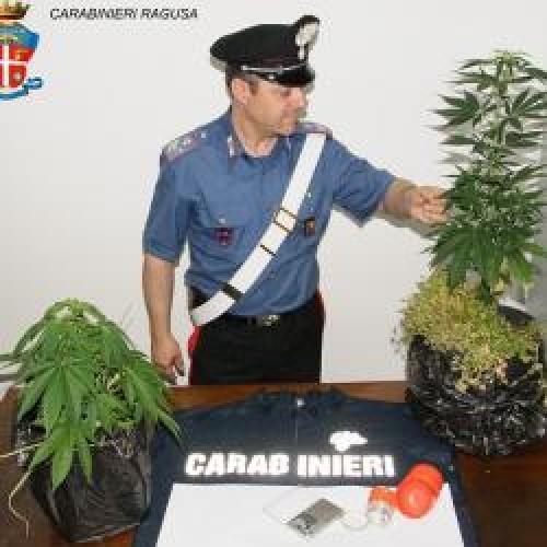 http://www.ragusanews.com//immagini_articoli/08-06-2015/droga-fai-da-te-a-comiso-500.jpg