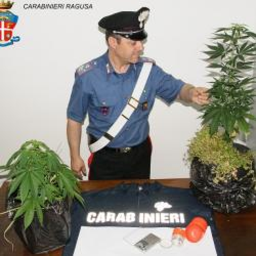 https://www.ragusanews.com//immagini_articoli/08-06-2015/droga-fai-da-te-a-comiso-500.jpg