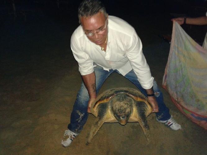 https://www.ragusanews.com//immagini_articoli/08-08-2014/enzo-king-rimette-in-mare-una-caretta-caretta-di-50-chili-500.jpg
