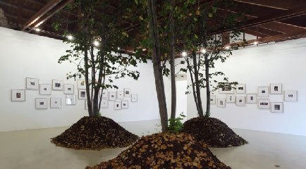 https://www.ragusanews.com//immagini_articoli/08-12-2018/foresta-urbana-mostra-palermo-240.jpg