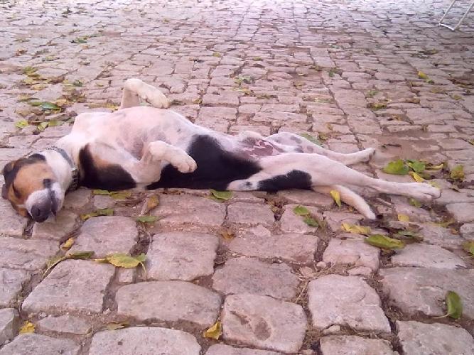 https://www.ragusanews.com//immagini_articoli/09-01-2014/abbiamo-perso-il-cane-romeo-500.jpg