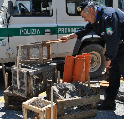 http://www.ragusanews.com//immagini_articoli/09-05-2014/la-polizia-provinciale-sequestra-trappole-per-conigli-selvatici-500.jpg